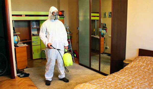 Уничтожение насекомых в квартире москва