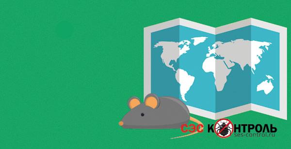 myshi fact puteshestviia - Как узнать есть ли в холодильнике мышь