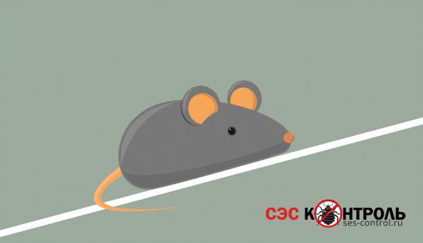 myshi fact scalolaz - Как узнать есть ли в холодильнике мышь