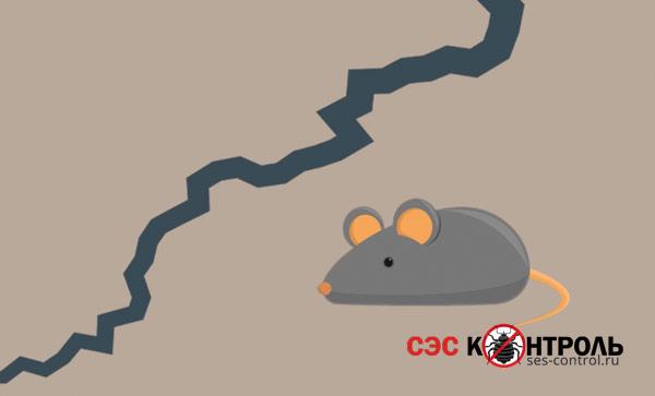 myshi fact treshina - Как узнать есть ли в холодильнике мышь