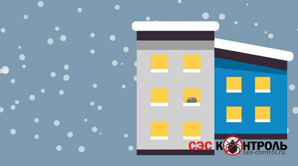 myshi fact zima - Как узнать есть ли в холодильнике мышь